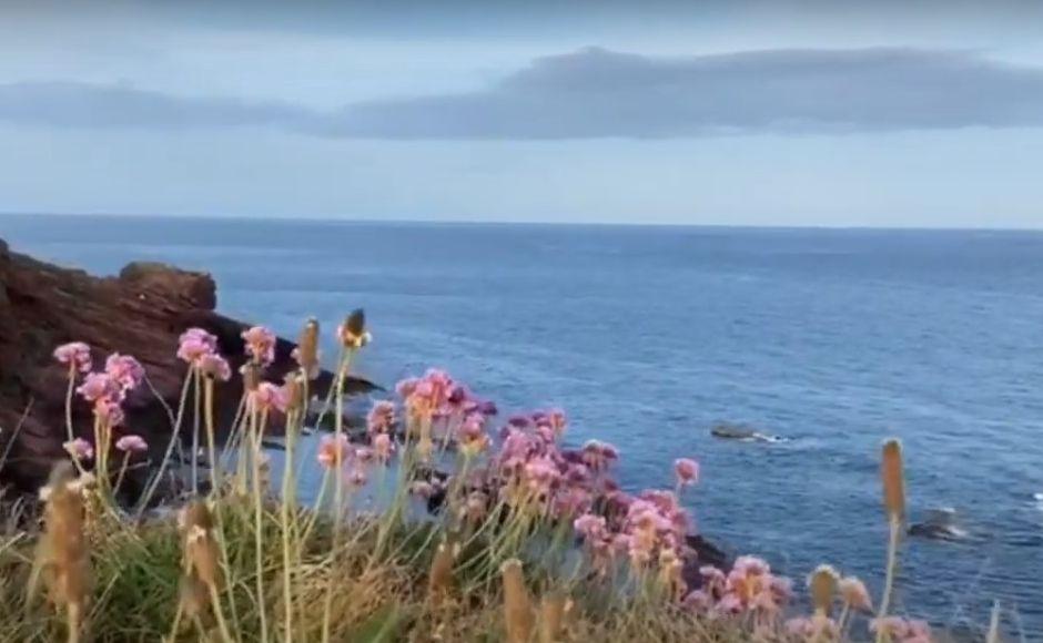 The coastline near Arbroath