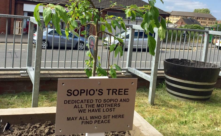 Sopio's tree