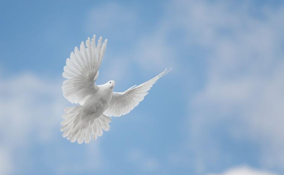 Dove flying in the sky