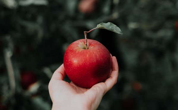 hand holding an apple