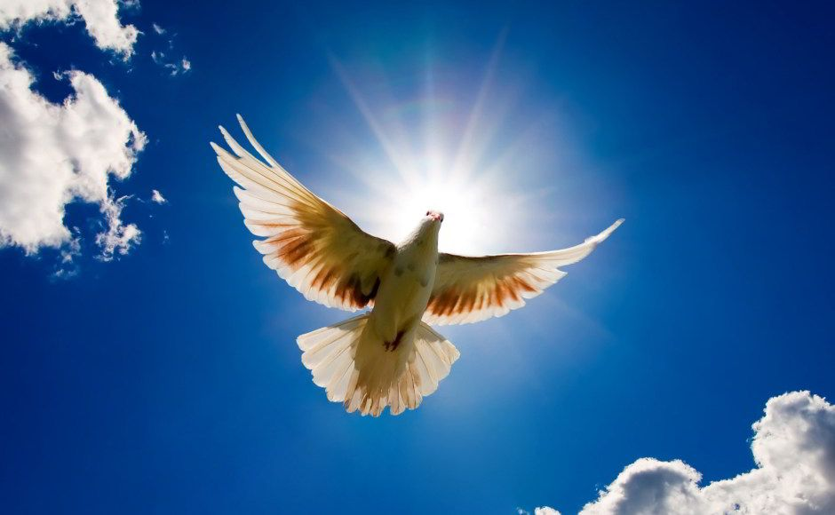 Dove of Peace by Flickr user  sheilapic76
