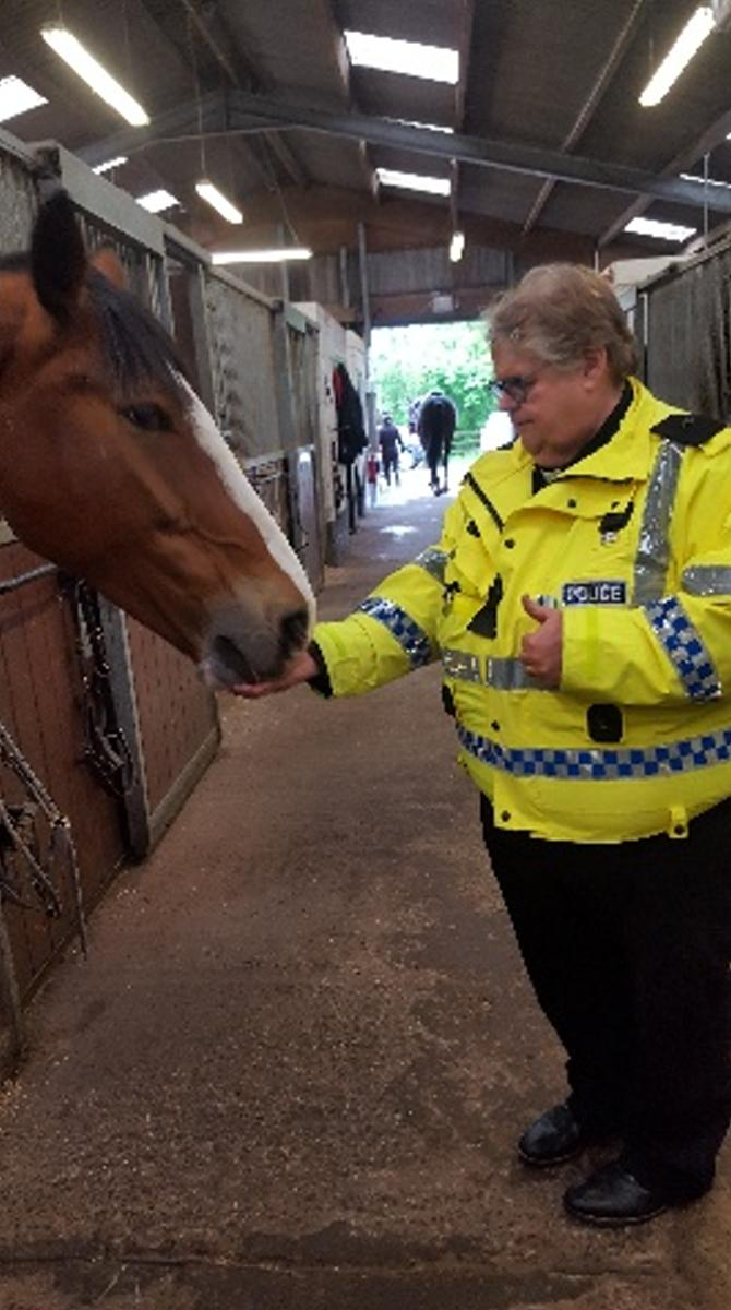 Horse Neil Galbraith