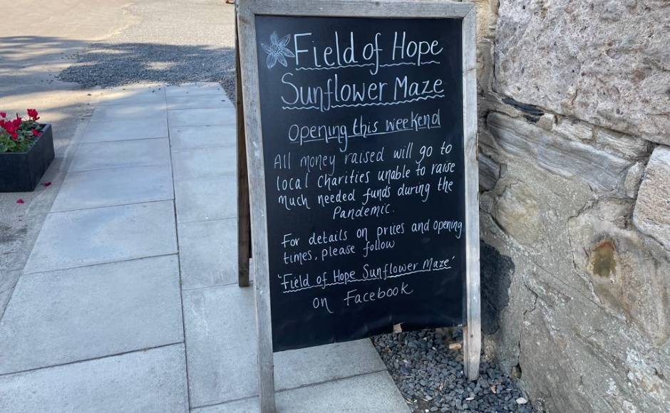 Sunflower maze Fife