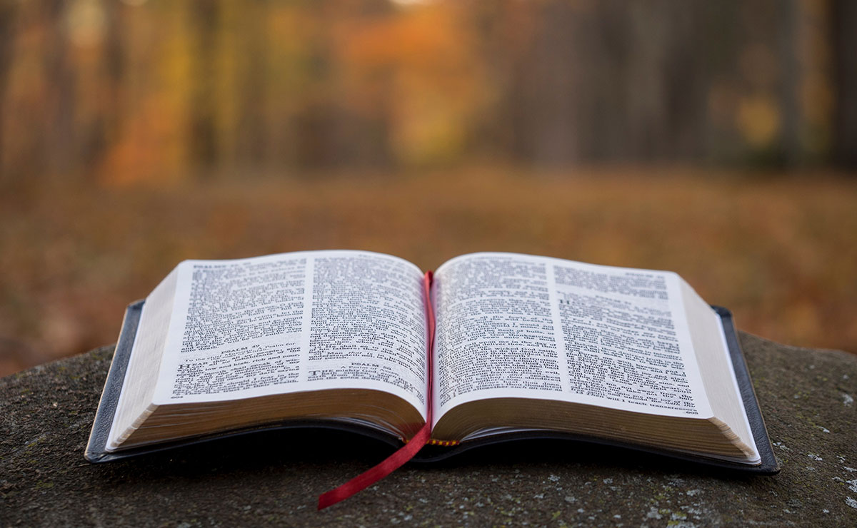 Open bible in autumn forest
