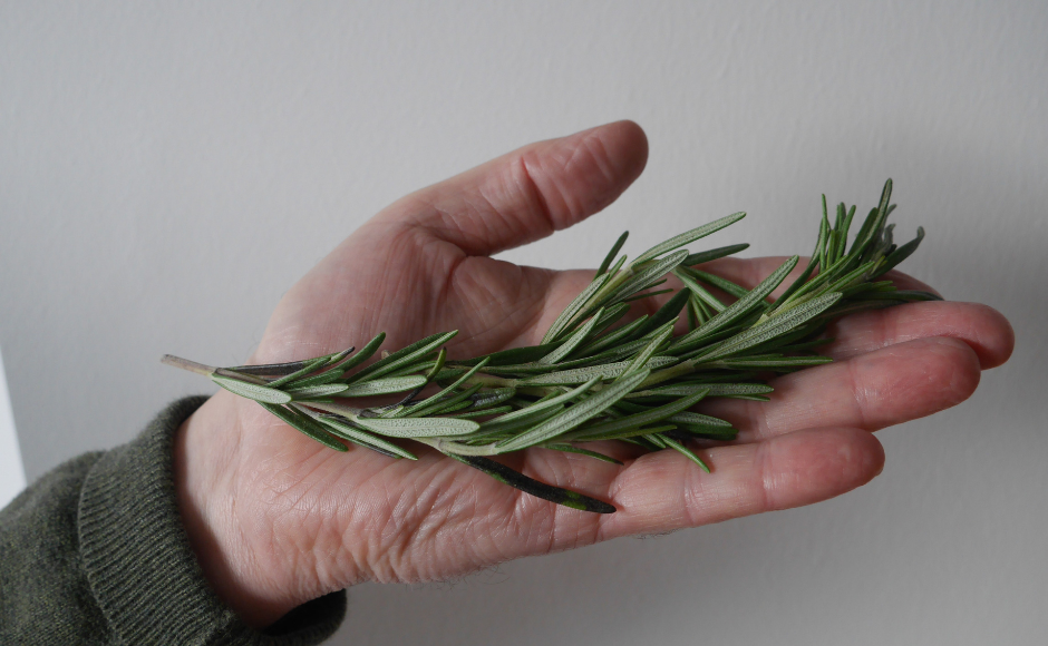 Hand holding a sprig of rosemary